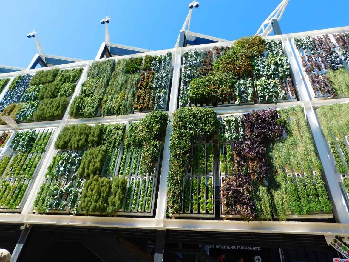 How does a vertical garden work? Blanc's are often made of a metal frame that's either fastened to the walls or free-standing.