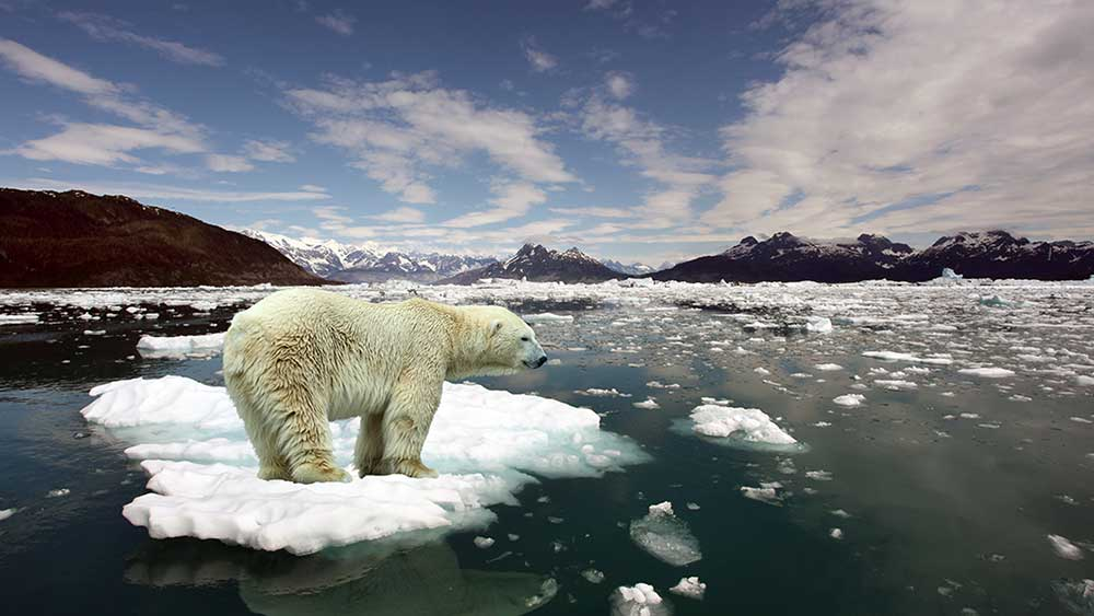 Rising temperatures will impact more than just our own species.
