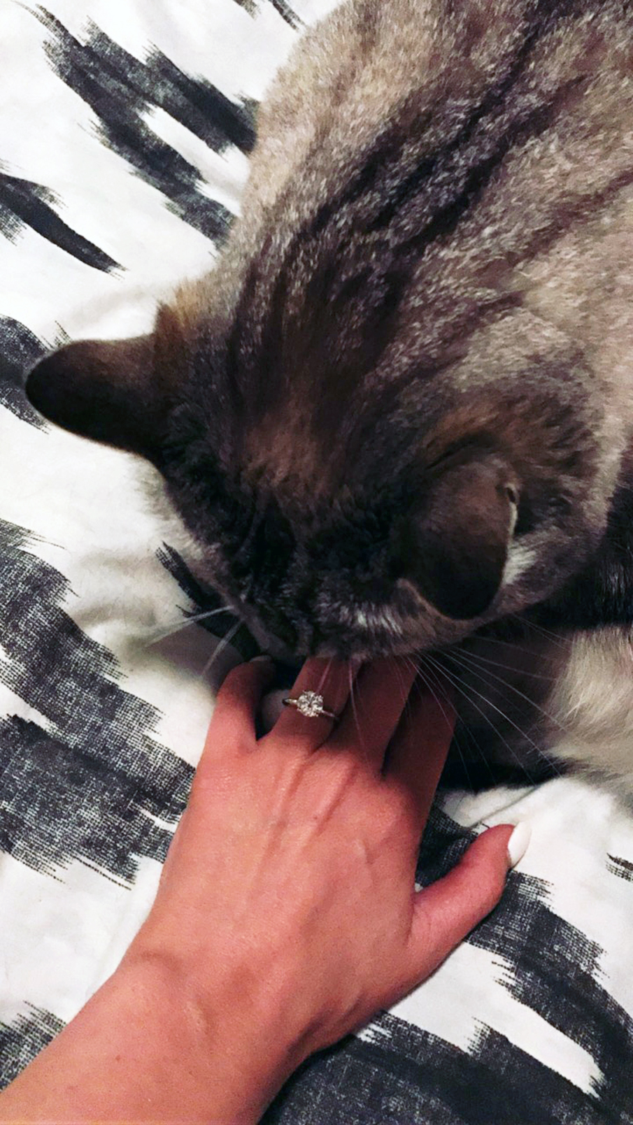 kitty engagement