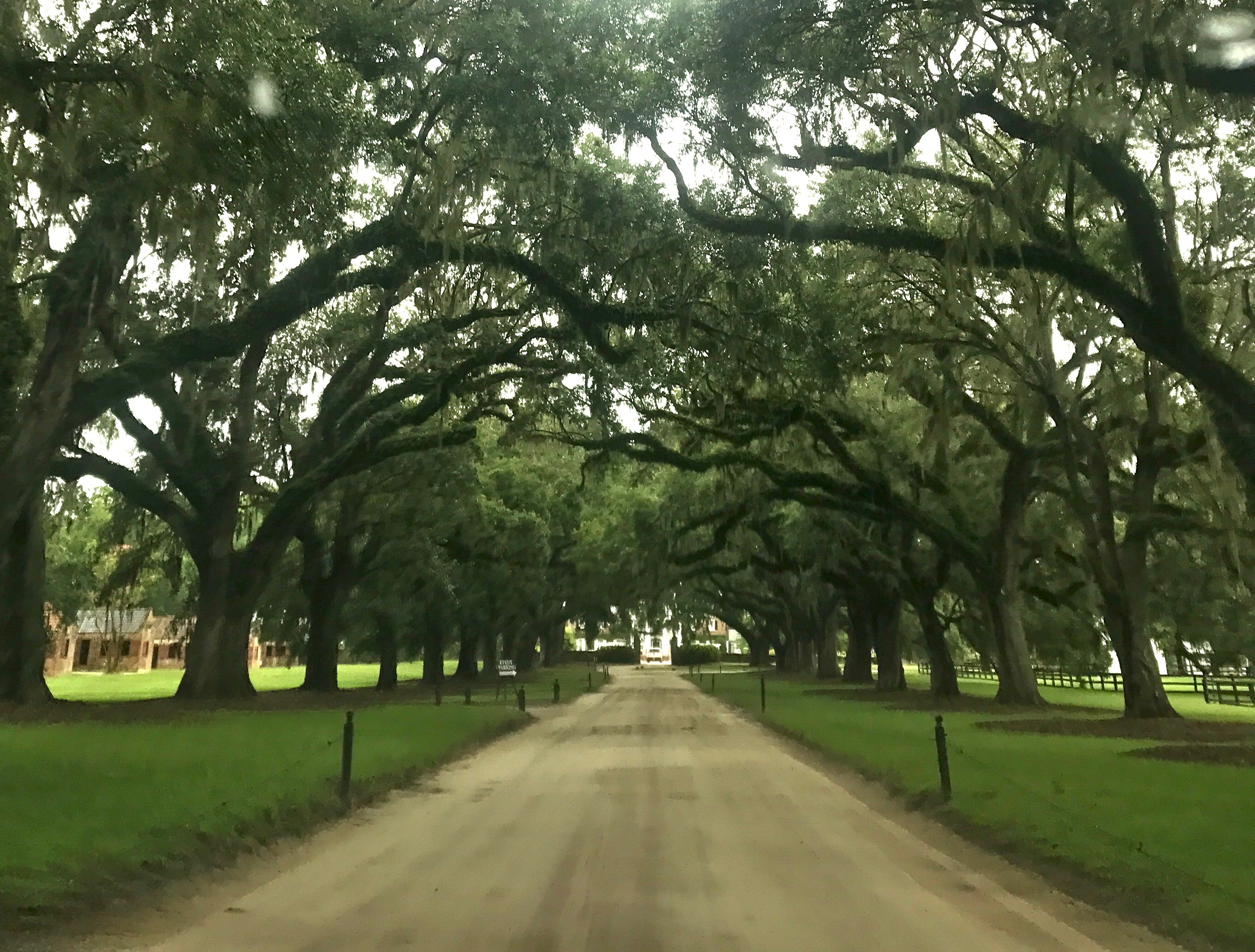 Mount Pleasant Day Trip Boone Hall Avenue of Oaks