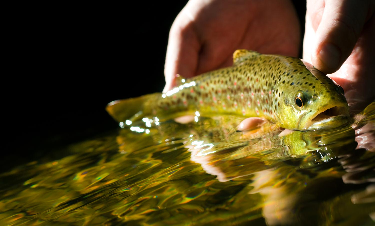 Catch And Release Practices For Small Fish Fly Fishing Gink And Gasoline How To Fly Fish