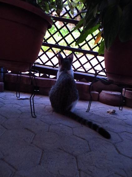 ミンダナオの島の朝_2