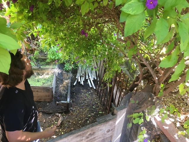 ベティさんちの庭