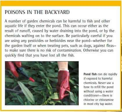 Poisons in the backyard