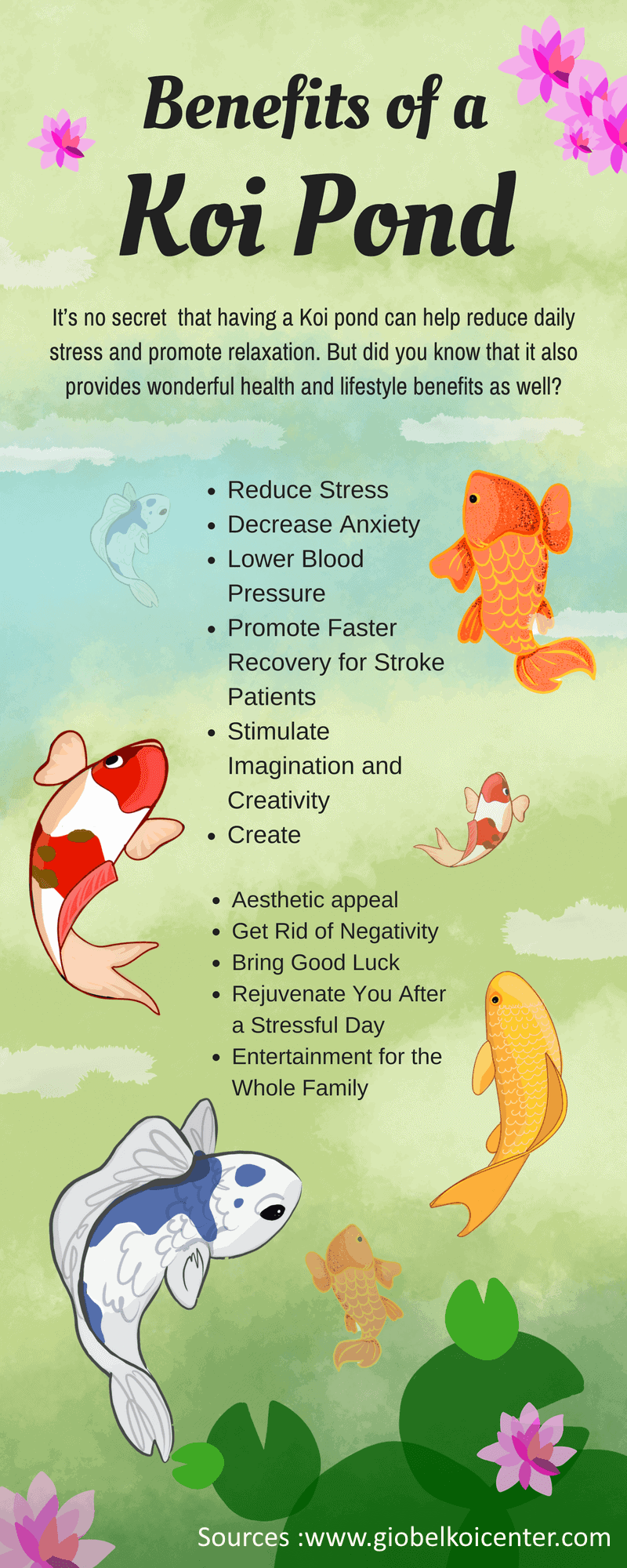 koi fish therapheutic benefits of keeping koi fish