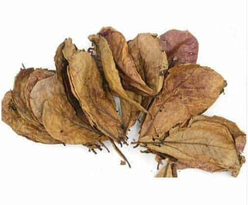 indian almond leaf for betta