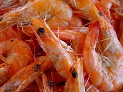 what do koi fish eat shrimp