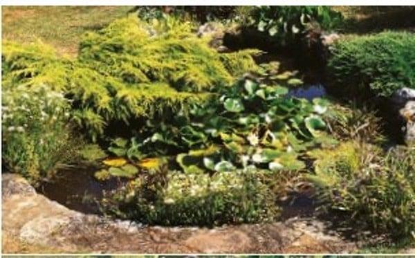 planted garden koi pond