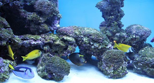 A Sprinkle of Salty Fun Saltwater Aquarium