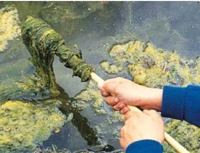 keeping a koi pond clean