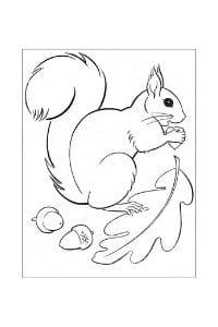 disegni da colorare e stampare scoiattoli che rosicchia la foglia