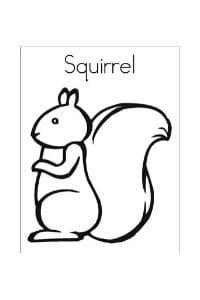 disegni da colorare e stampare scoiattolo squirrel