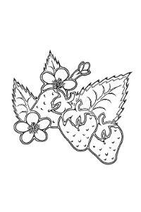 fragole e fior di fragola disegno da colorare