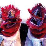 ESKI PAZARDA TAZE BALIK pesce fresco all'antico mercato