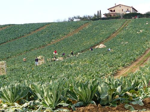 incontri online agricoltori