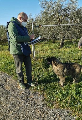 Pomezia, cane in un recinto senza acqua: intervengono Guardie Zoofile