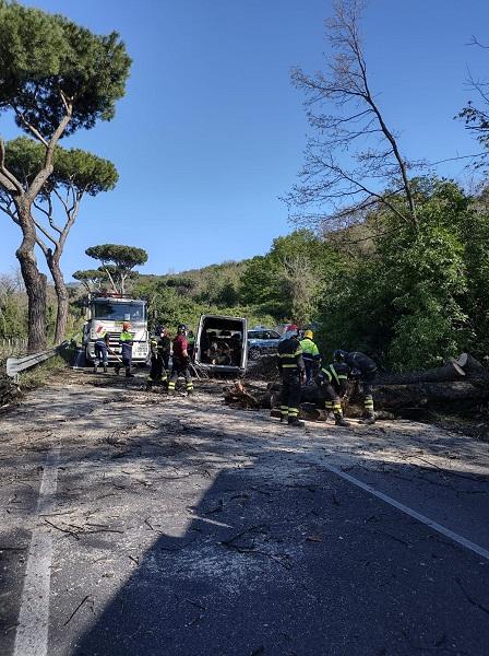 Marino, albero cade su strada: sul posto Forze dell'Ordine e Protezione Civile