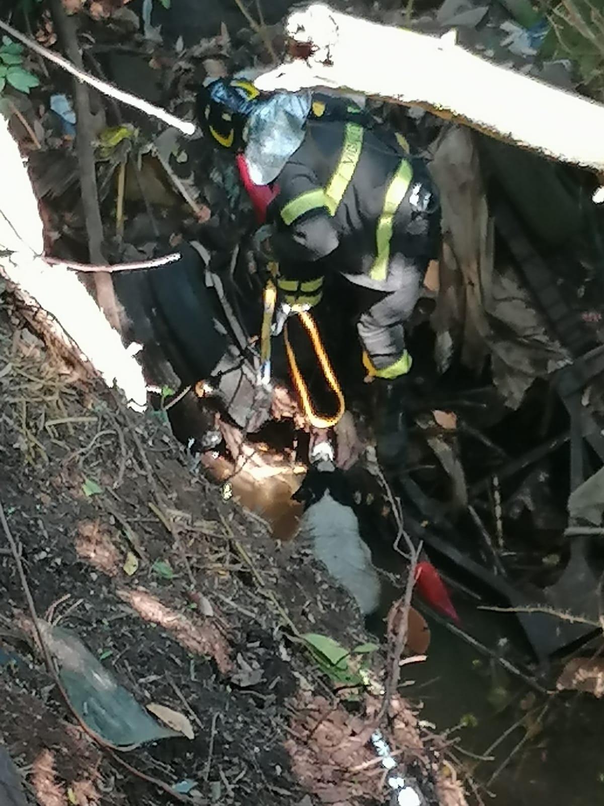 Velletri, i Vigili del Fuoco salvano un cane caduto in un fosso