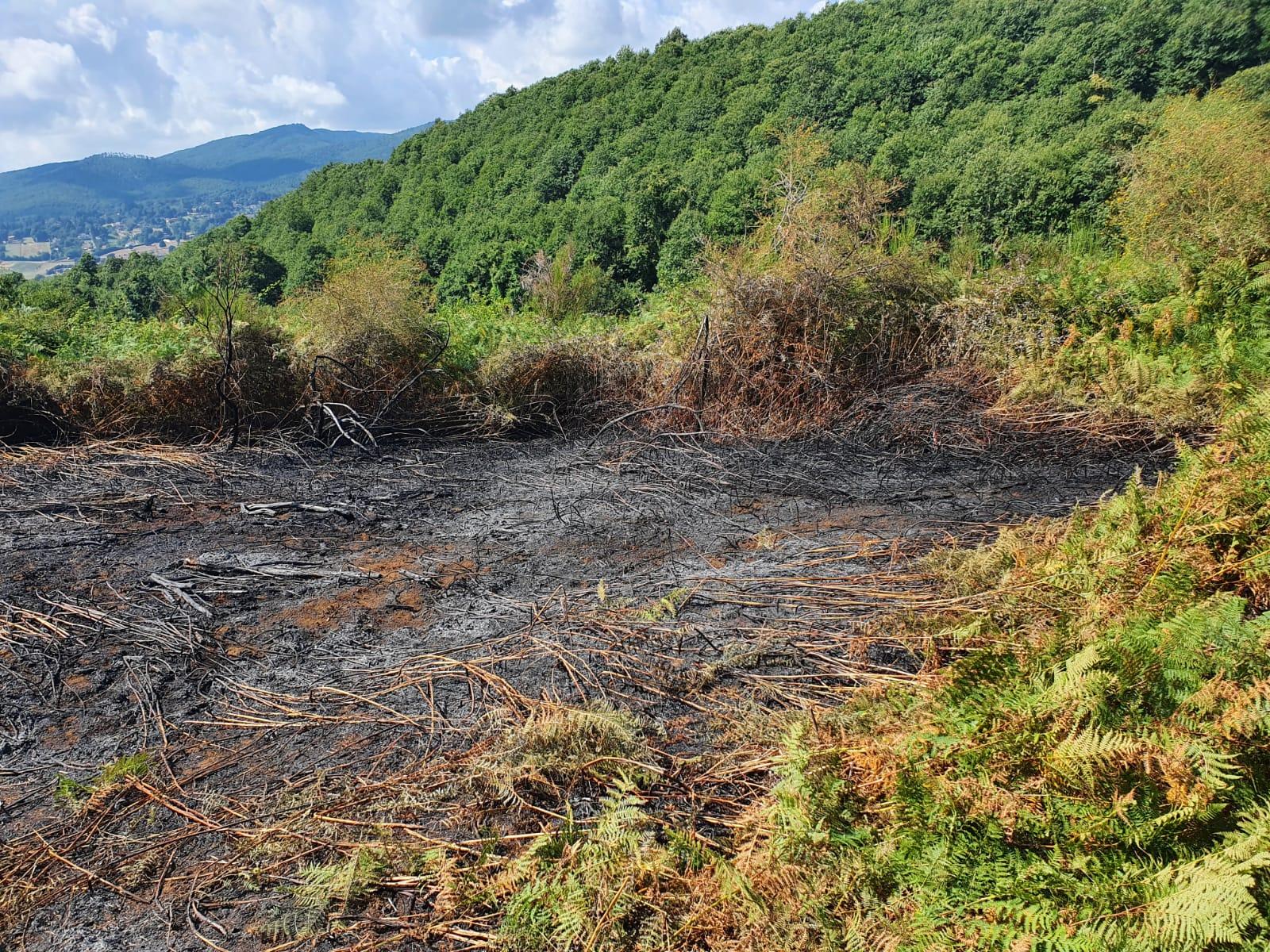 Rocca Priora, spento un incendio doloso sul Monte Ceraso