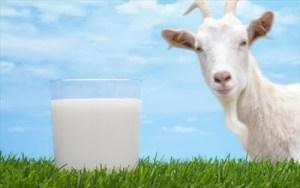 Κατσικίσιο γάλα αντί για αγελαδινό. Τα πολλαπλά οφέλη για την υγεία μικρών και μεγάλων