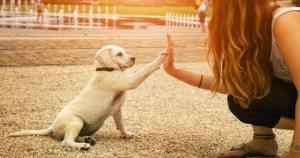 Read more about the article Το ξέρατε; Οι σκύλοι καταλαβαίνουν τα λόγια και τη χροιά της φωνής μας…