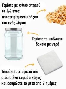 Read more about the article Πείτε Αντίο Στο Περιττό Βάρος Ρόφημα με φύτρο σιταριού