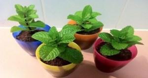 Read more about the article Eάν Έχετε Αυτό Το Φυτό Στο Σπίτι Σας Δεν Θα Δείτε Ποτέ Ξανά Αράχνες & Έντομα!