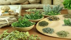 Ποιο ελληνικό βότανο προστατεύει από καρκίνο και διαβήτη