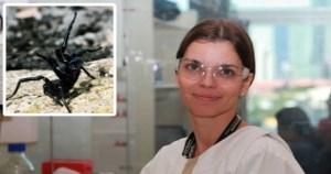 Read more about the article Ελληνίδα επιστήμων ανακάλυψε ότι το δηλητήριο από θανατηφόρες αράχνες της Αυστραλίας μπορεί να αποτελέσει θεραπεία του καρκίνου