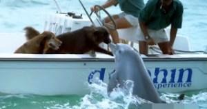 Read more about the article Η στιγμή που δελφίνι πλησιάζει σκάφος για να φιλήσει δυο σκύλους