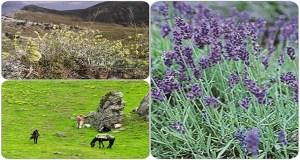 Ελληνικά αρωματικά-φαρμακευτικά φυτά: Από κομπάρσοι στο μαγείρεμα, υπερτροφές στη μεσογειακή διατροφή