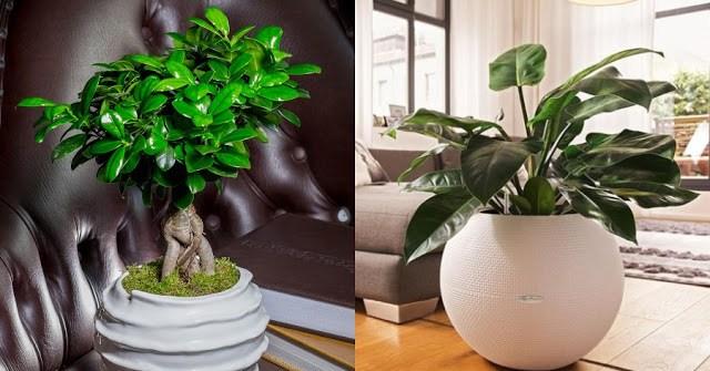 Τα 15 καλύτερα φυτά εσωτερικού χώρου