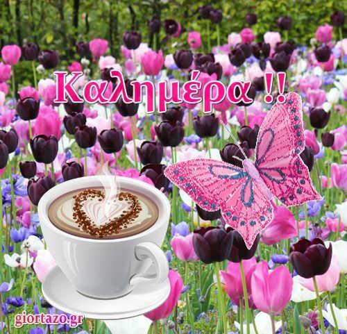 καφές λουλούδια πεταλούδα
