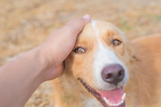 Read more about the article Όποιος δεν έχει ζήσει με σκύλο δεν θα καταλάβει τι σημαίνει γενναιόδωρη αγάπη