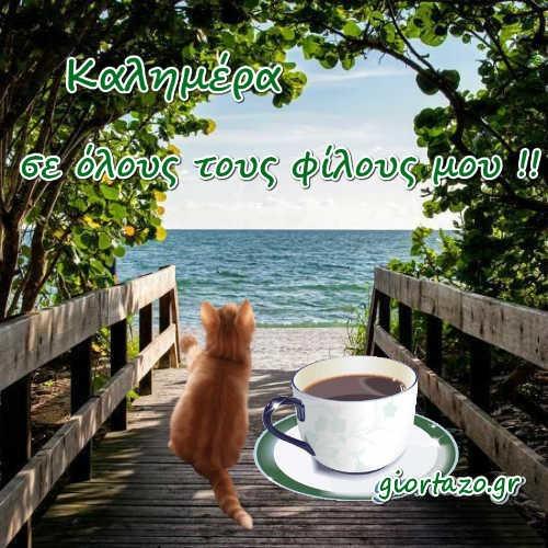 δέντρα καφές γατούλα