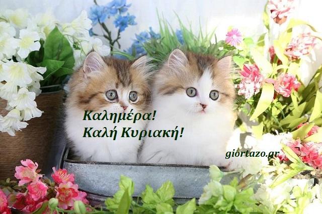 καλημερα γατακια