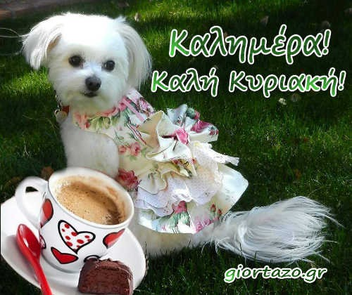 Καλημέρα σκυλάκι καφές