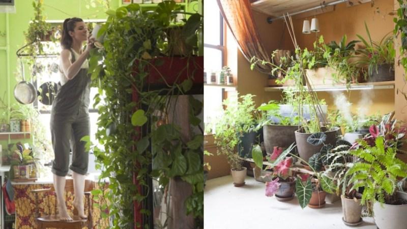 29χρονη καλλιεργεί 500 φυτά στο μικρό της σπίτι