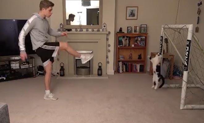 Γάτα-τερματοφύλακας γίνεται viral και «ρίχνει» το Twitter