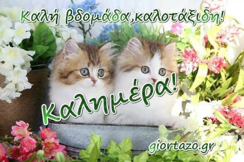 καλημέρα γατούλες