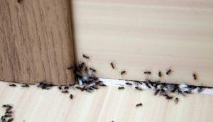 Read more about the article Πώς να απαλλαγείς από τα μυρμήγκια με υλικά που ήδη έχεις στο σπίτι
