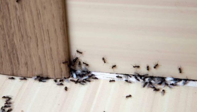 Πώς να απαλλαγείς από τα μυρμήγκια