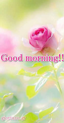 Good Morning With Smile Beautiful Pictures