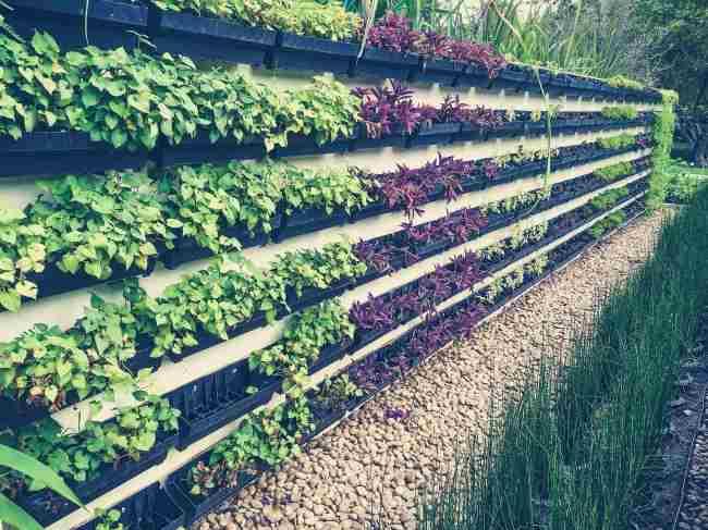 Καλλιέργεια στον τοίχο