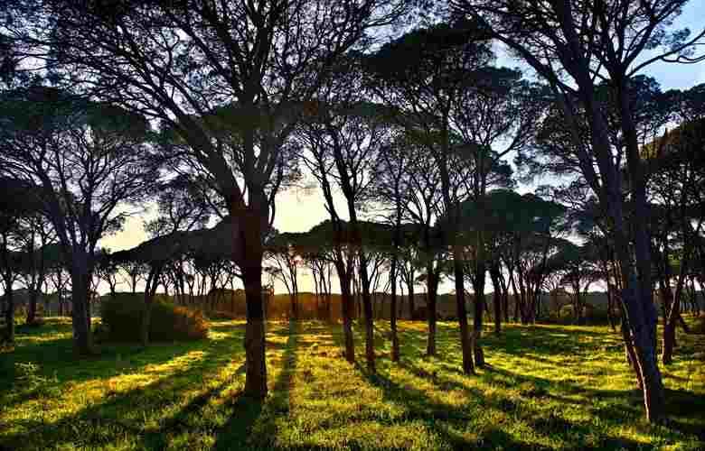 μεγαλύτερο παραθαλάσσιο δάσος της Ελλάδας