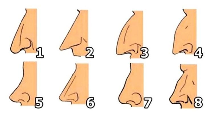 ΤΙ λέει το σχήμα της μύτης