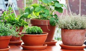Πως θα μεγαλώσουν τα φυτά σας
