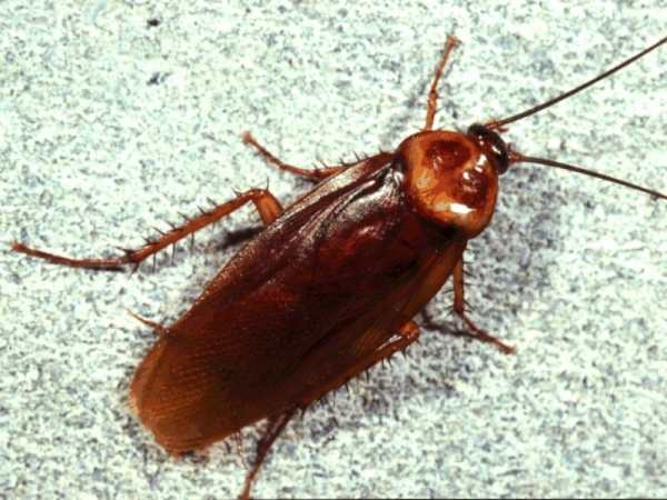 Read more about the article 8 φυσικοί τρόποι για να εξαφανίσεις τις κατσαρίδες από το σπίτι!