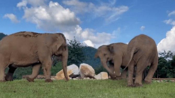 Read more about the article Το συγκινητικό βίντεο με ελέφαντα που καθοδηγεί τον τυφλό φίλο του στο φαγητό τους