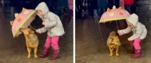 Read more about the article Μικρό παιδί προστατεύει σκύλο από τη βροχή και ο αυθορμητισμός του μας δίνει ενα γερό μάθημα